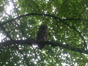 Owl at Mindworks Hypnosis