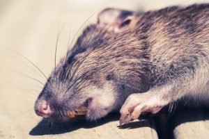 A limiting belief is like a dead rat under the carpet.